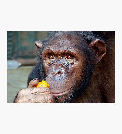 Chimp Mother Photographic Print