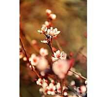 Standing Out Photographic Print