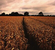 Tracks in the field by Lee West