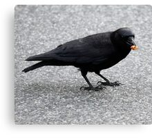 Crow With Treat Canvas Print