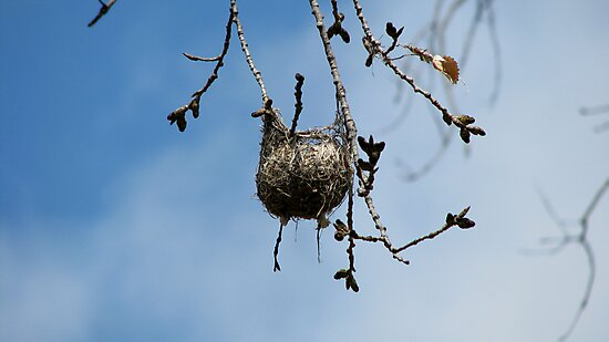 Orioles Pendent Nest by swaby
