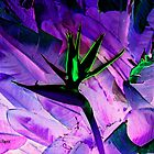 Bird of Paradise Altered by Dana Roper