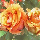 fall roses by aquaarte