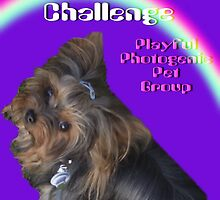 Baby Banner ll ~ For A Challenge~Playful Photogenic Pets  by Gail Bridger