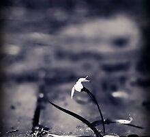...through cobbled path... by Geoffrey Dunn