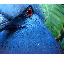 Blue Winged Perfection Photographic Print