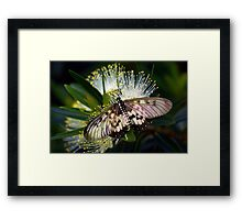 Glasswings Framed Print