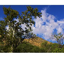 Arizona Sycamore Photographic Print