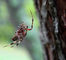 Spider by Daniel Owens