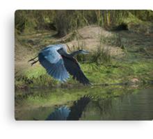 Great Blue Heron In The Salt Marsh Canvas Print