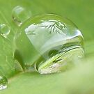raindrops captured - magical world of nature! by gaylene