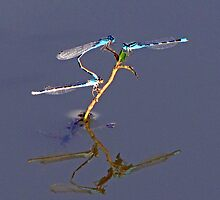 The Tandem Male has the Highest View  by Chuck Gardner