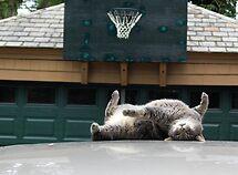 a cat's life by eelsblueEllen