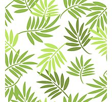 Green palm leaves pattern Photographic Print