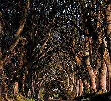 Dark Hedges Canopy by Wrayzo