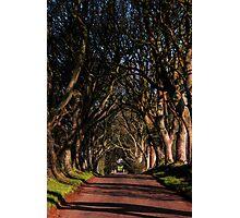 Dark Hedges Canopy Photographic Print
