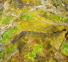Rockpool 4 by Paul Starkey