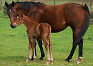 Little Filly by annibels