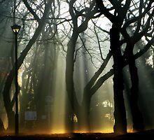 Lantern Waste by kibishipaul