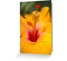 Hibiscus sunshine Greeting Card