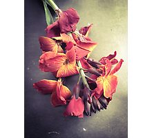 Wallflower/Autumnal Photographic Print