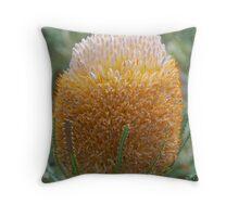 Acorn Banksia, Kings Park, Western Australia Throw Pillow