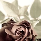 Antique red rose by Sandra O'Connor