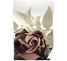 Antique red rose Poster