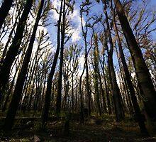 Yarra Valley - Rejuvenation by Darren Wright