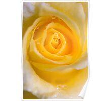 Sunburst rose Poster