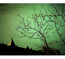 Go Green Photographic Print