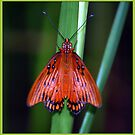 Folded Wings by glink