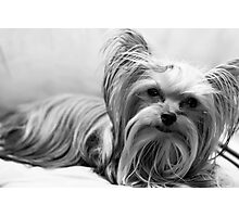 Another, for all those puppy lovers! Photographic Print