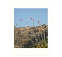 Desert Flowers Art Print
