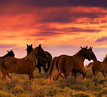 LAST OF AMERICA'S LIVING LEGENDS THE WILD HORSES  by Jeanne  Nations