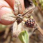 Ladybird by rinajoy