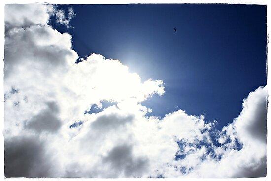 High as a Kite, freedom through flight by Fiona Christensen