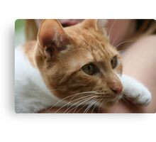 Close up wiskers  Canvas Print