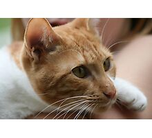 Close up wiskers  Photographic Print