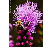 if i were a flower growing wild and free, all i'd want is you to be my sweet honey bee Photographic Print