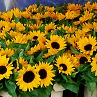 Sunflowers for Sale by Whitney Edwards
