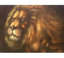 golden lion  Photographic Print