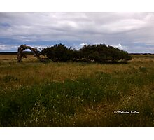 Leaning River Gums, Greenough, WA Photographic Print