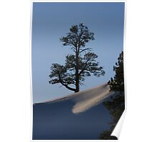Tree on Snow-Covered Ridge Poster