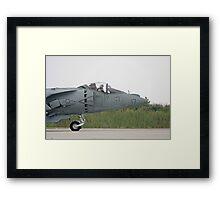 Harrier Framed Print
