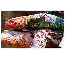 Back Stroke Reptile Poster