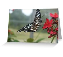 Glasswing Beauty Greeting Card