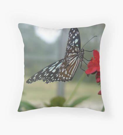 Glasswing Beauty Throw Pillow