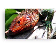 Lizard Close Up Canvas Print