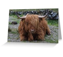 Fluffy Highland Cattle Greeting Card